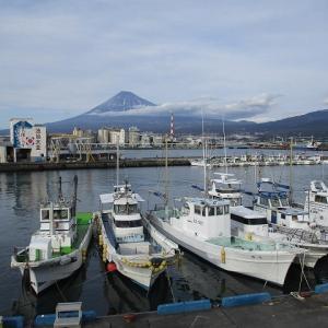 水が引かれる夏が楽しみな「鮫島ビオトープ」 田子浦地区をウォーキング