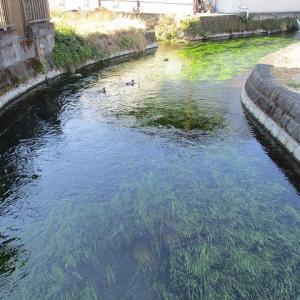 こうも急激だと心配になってくる!  昨年末から水位が下がった田宿川