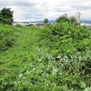 雨で全体での草刈りは中止になったが、回復した昨日は滝川で記念のエリアを個人的に草刈り