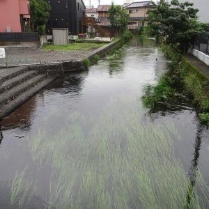 距離が長い田宿町は次回順延が許されない!  田宿川の川そうじ