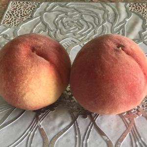 フルーツモーニング 桃を頂きました