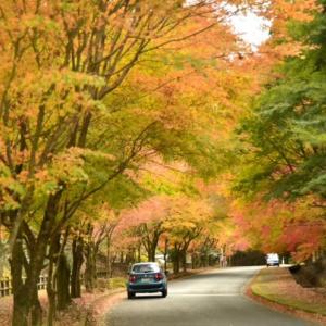 県 緑 化 セ ン タ ー の 紅 葉