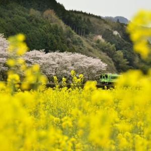 錦 川 清 流 線 の 春