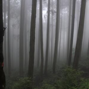 夢  (霧)  中