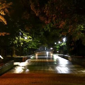 人 通 り の 少 な い 夜 の 街