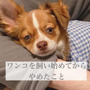 【ペットとの暮らし】犬を飼ってからやめたこと