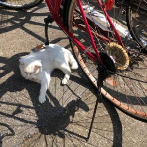 自転車好き…