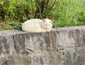 崖の上の猫…