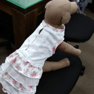 ヒロアミー洋裁教室の入会試験