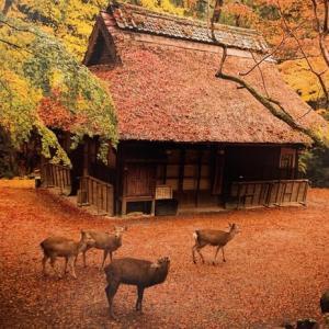 そうだ奈良、行こう。