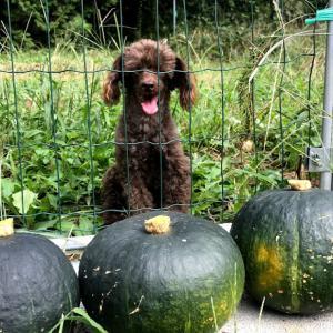 大収穫の秋