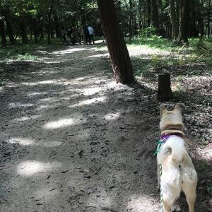 お散歩会が始まった!