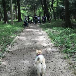 お散歩会で得た「財産」