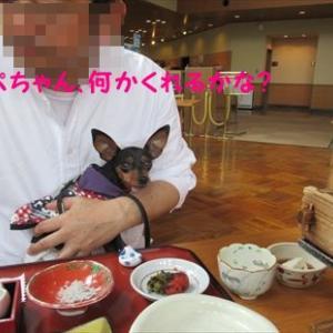 6月3日 家族旅行 松坂わんわんパラダイスの朝食時のワンズ