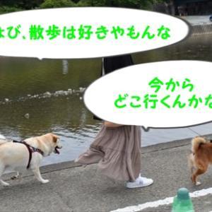 6月3日 家族旅行 おかげ横丁 ちょび・はり編