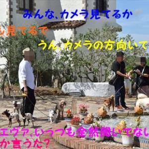 6月3日 家族旅行 志摩地中海村 我が家のワンズ編