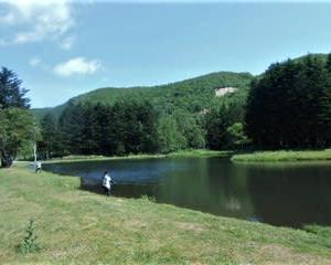 二か月ぶりに、赤井川村の管釣りへ(Tomo PlayPark=トモ・プレイパーク、北海道)ニジマスが時速14.5尾