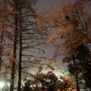 雪が降った後は幻想的な夜散歩