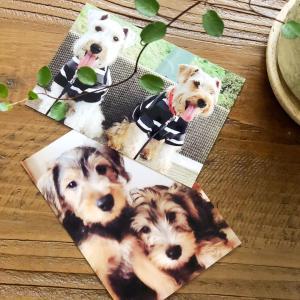 愛犬達へ沢山の感謝をする日♡︎ʾʾ