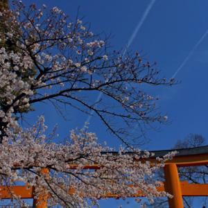 2019 桜8