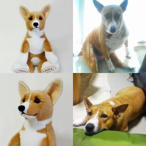 ミックス犬『ひなちゃん』のウェイトドール