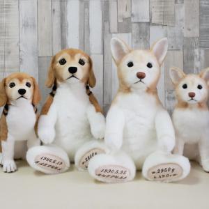 ビーグル『こうくん』とミックス犬『ぼんたくん』のお座りぬいぐるみとウェイトドール