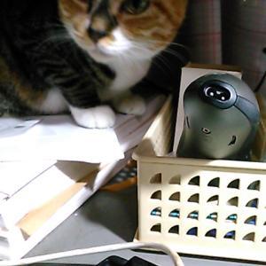 ネコにまつわるいい話ー3