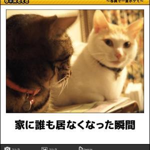 ネコはその時 何思う