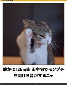 ネコは何を思ふ