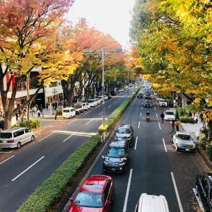 表参道の紅葉
