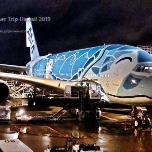ANA/NH184・ホノルル線A380ついにフライングホヌに搭乗!