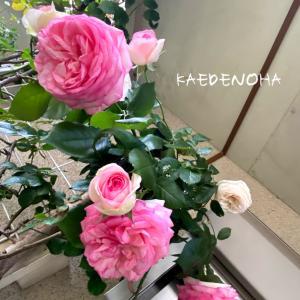 香る庭、やはりピエールはどんな花とも合います