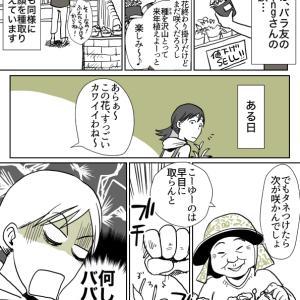 適当園芸漫画-パコ庭「思わず茫然(花盗まれ系azkingさん体験談)」