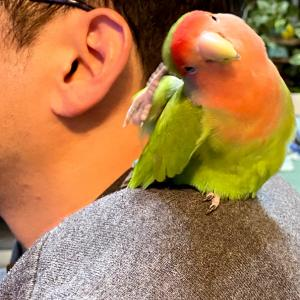 小鳥たちの悪行…