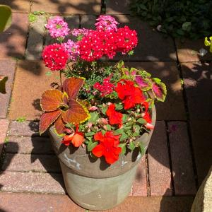 夏の寄せ植え、赤い太陽のようなインパチェンスとコリウス