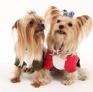【犬の腎不全】療法食の成分を徹底比較(ウエットフード編)、そして飼い主に出来ること