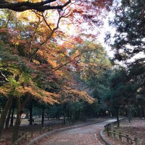 今日も奈良