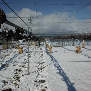 気温の変動が激しい中、冬から春の農作業を進めています