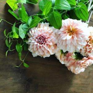今日の朝の花
