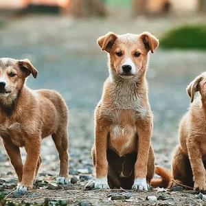 犬猫の幸せを一番に考えると、なぜ?私たちが行動する必要があるのかが見えて来ます。
