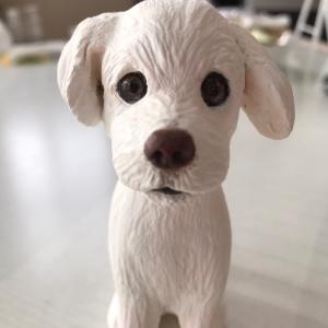 鼻でかワンコが撮りたい…