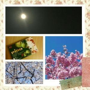 スーパームーン&ピノ&桜とか♪