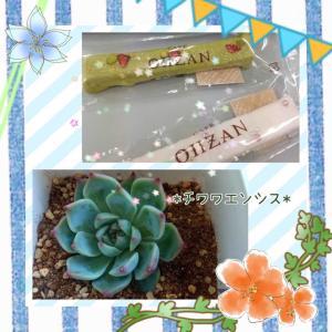 CAFE  OHZANのラスクとチワワエンシス♪