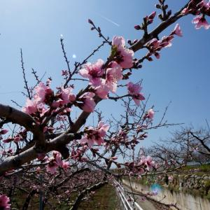 春の歌 / スピッツ