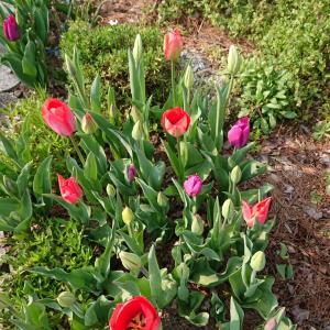 春を感じる写真、みせて!