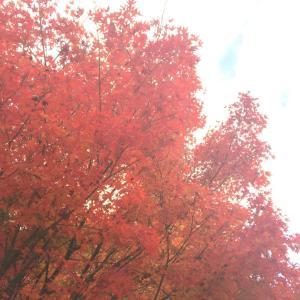 紅葉を観に♡一庫公園へ