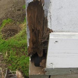 拠点倉庫の破けた外壁と木部を修理しました。