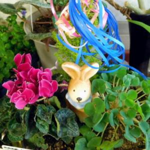 ~ リビングに同居している花の生長 w(゚o゚)w オオー!~