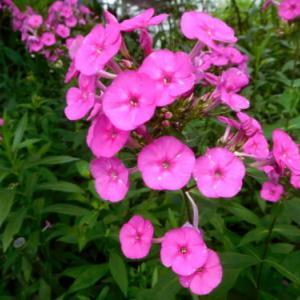 雨の中の花々は元気 (゚Д゚≡゚д゚)エッ!?オオーw(*゚o゚*)w