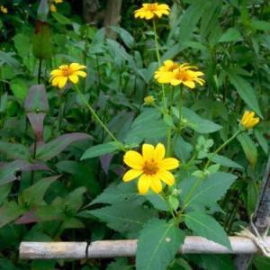 三角花壇の花の背丈は (^∀^)(*'-'*)